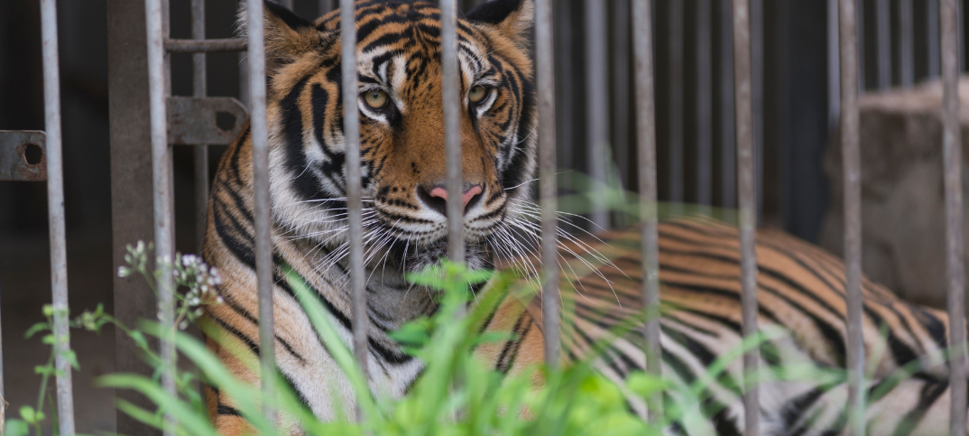 16 Biggest Advantages and Disadvantages of Zoos