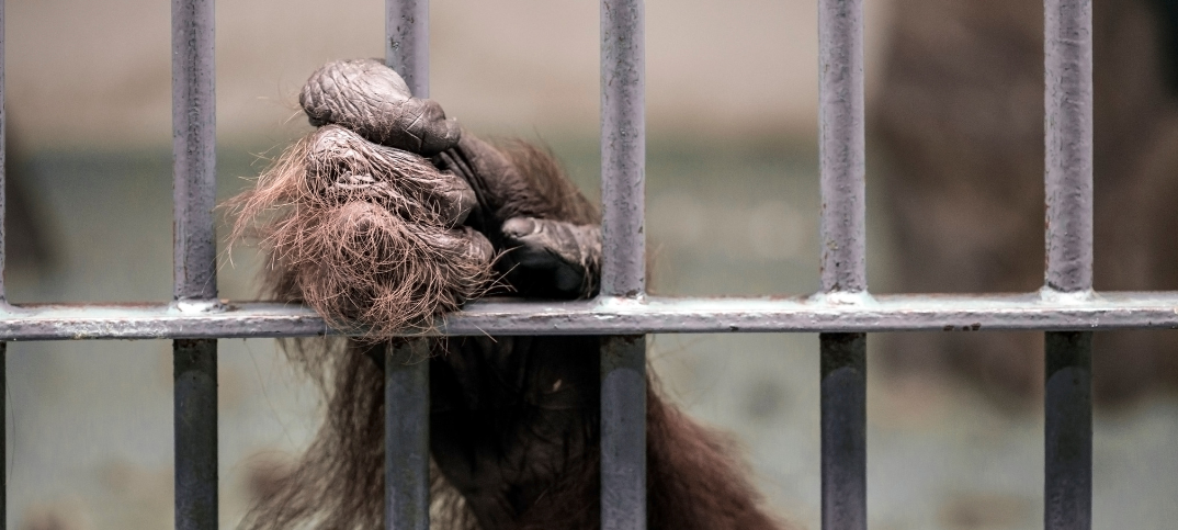 17 Pros and Cons of Keeping Animals in Captivity