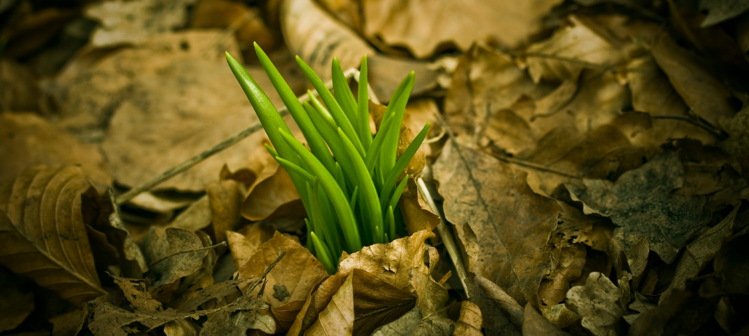 7 Strong Prayers for Spring Renewal