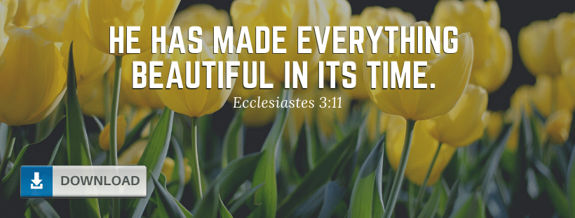 Flowers Bible Verse Fb Cover