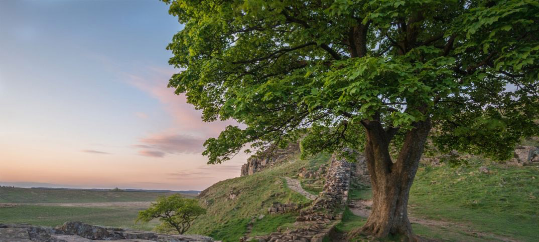 Lessons Learned from Zacchaeus in the Bible