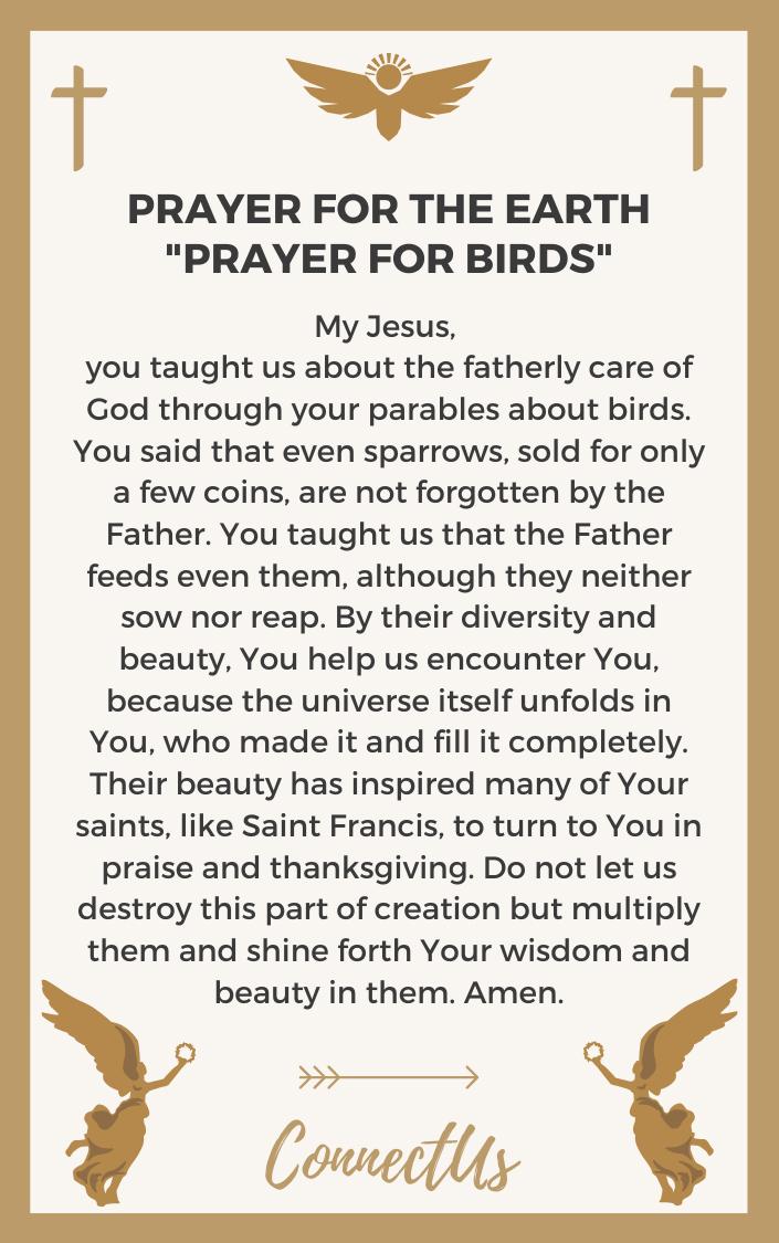 prayer-for-birds
